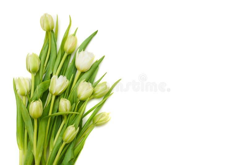 Ramalhete delicado das tulipas brancas sobre a configuração branca do plano imagem de stock royalty free
