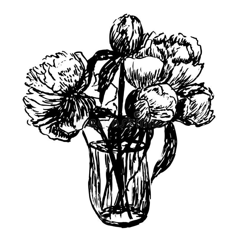 Ramalhete delicado de tiragem da ilustração das peônias ilustração royalty free