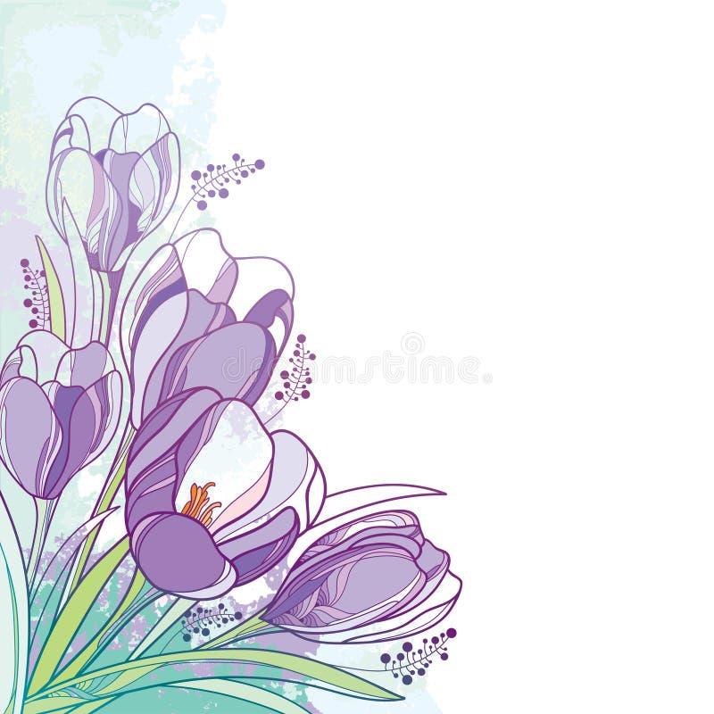 Ramalhete do canto do vetor com a flor violeta do açafrão ou do açafrão do esboço e a folha verde no fundo pastel Grupo floral or ilustração stock