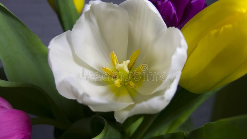 Ramalhete do close-up colorido das tulipas foto de stock