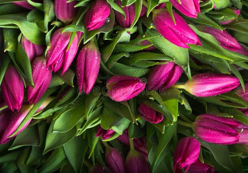 Ramalhete do close up cor-de-rosa das tulipas Fundo das tulipas foto de stock