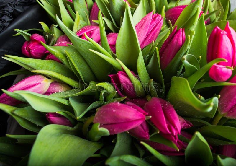 Ramalhete do close up cor-de-rosa das tulipas Fundo das tulipas foto de stock royalty free