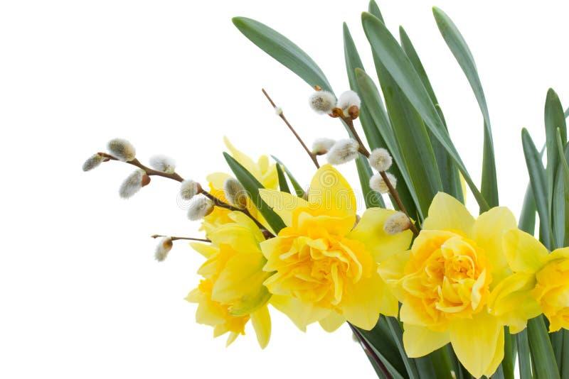 flores do daffodil com catkins fotografia de stock royalty free