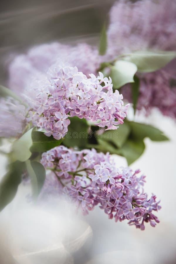 Ramalhete do lilás em um vaso branco em uma tabela de madeira nos raios do sol r fotografia de stock royalty free