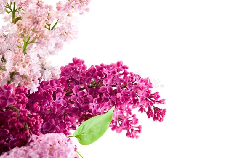 Ramalhete do Lilac imagem de stock