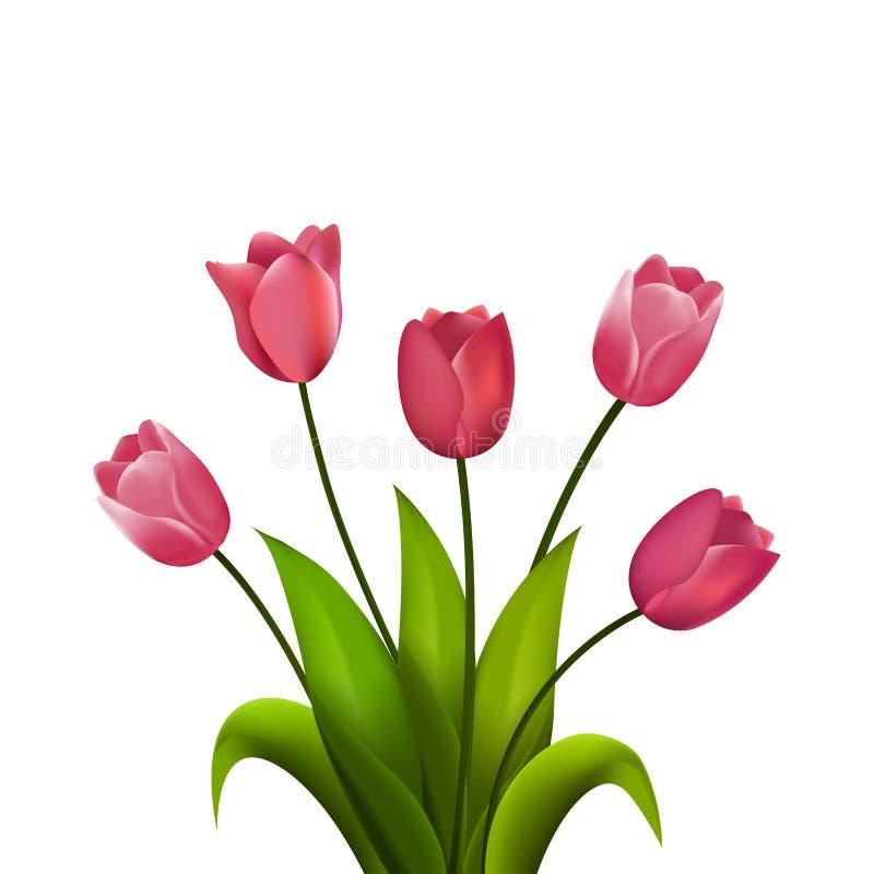Ramalhete do Tulip Ilustração do vetor Flores da mola isoladas no fundo branco ilustração do vetor