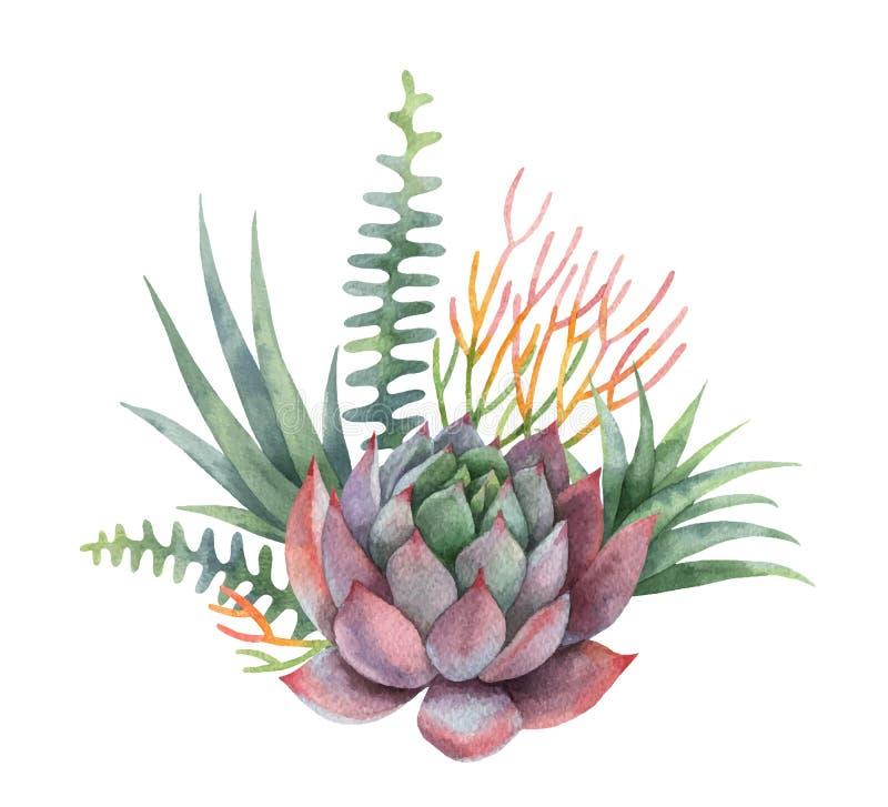 Ramalhete do vetor da aquarela dos cactos e das plantas suculentos isolados no fundo branco ilustração royalty free