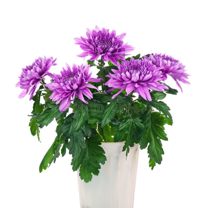 Ramalhete dos crisântemos no potenciômetro de flor imagem de stock royalty free