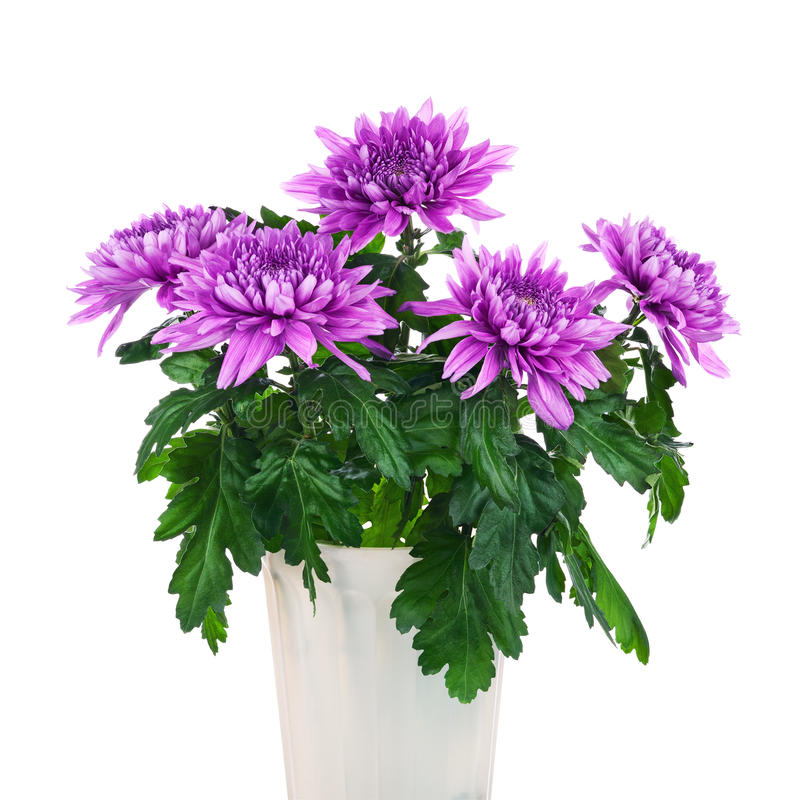 Ramalhete dos crisântemos no potenciômetro de flor fotos de stock