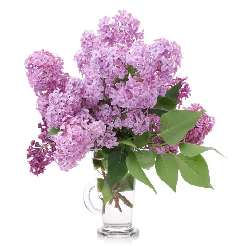Ramalhete dos lilás em um vaso de vidro isolado no branco Ramifique com flores lil?s fotos de stock