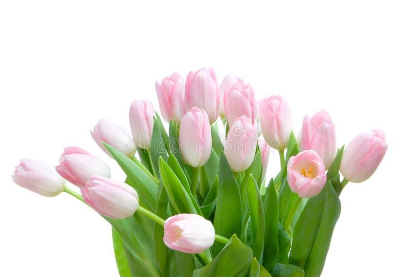 Ramalhete dos tulips fotos de stock royalty free