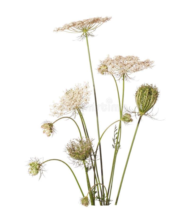 Ramalhete dos wildflowers fotos de stock