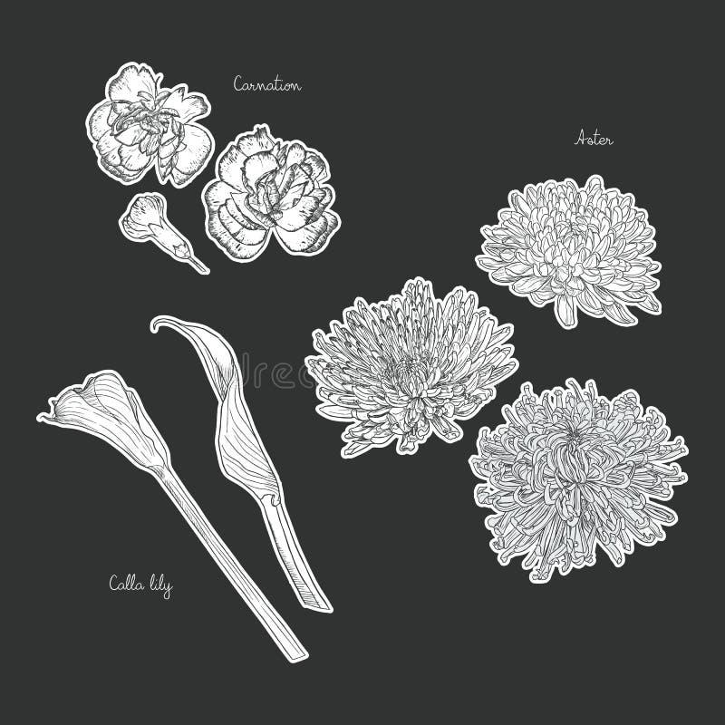 Ramalhete floral com as flores tiradas mão da mola ilustração do vetor