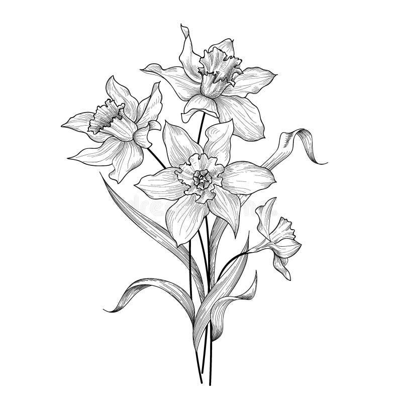 Download Ramalhete Floral Fundo Do Cartão Do Greetign Da Gravura Do Narciso Amarelo Da Flor Ilustração Stock - Ilustração de daisy, elegance: 80100079