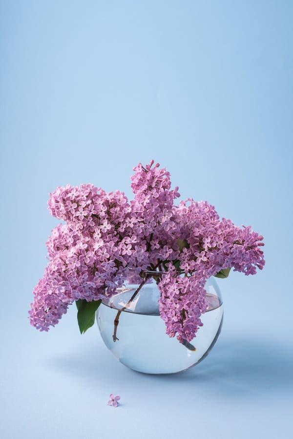 Ramalhete lilás de florescência no vaso transparente da esfera no fundo azul com pouca flor imagem de stock