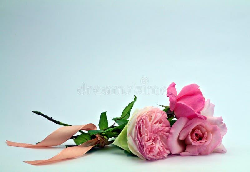 Ramalhete pequeno das rosas macias isoladas imagem de stock royalty free