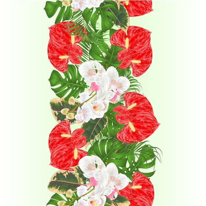 Ramalhete sem emenda do fundo da beira vertical floral com arranjo floral das flores tropicais, com as orqu?deas brancas bonitas, ilustração royalty free