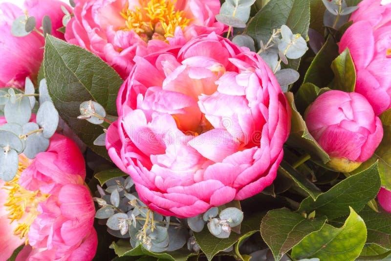Ramalhete surpreendente de pions cor-de-rosa imagem de stock royalty free