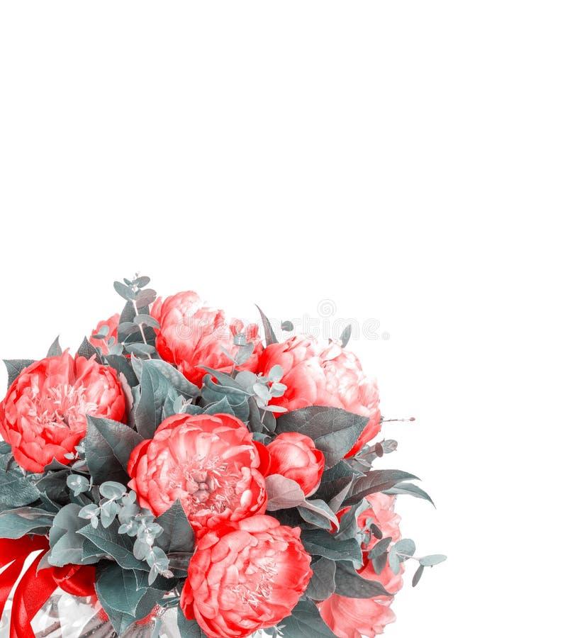 Ramalhete surpreendente de pions cor-de-rosa no branco fotos de stock royalty free
