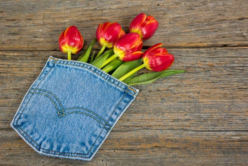 Ramalhete vermelho da tulipa no bolso de brim foto de stock