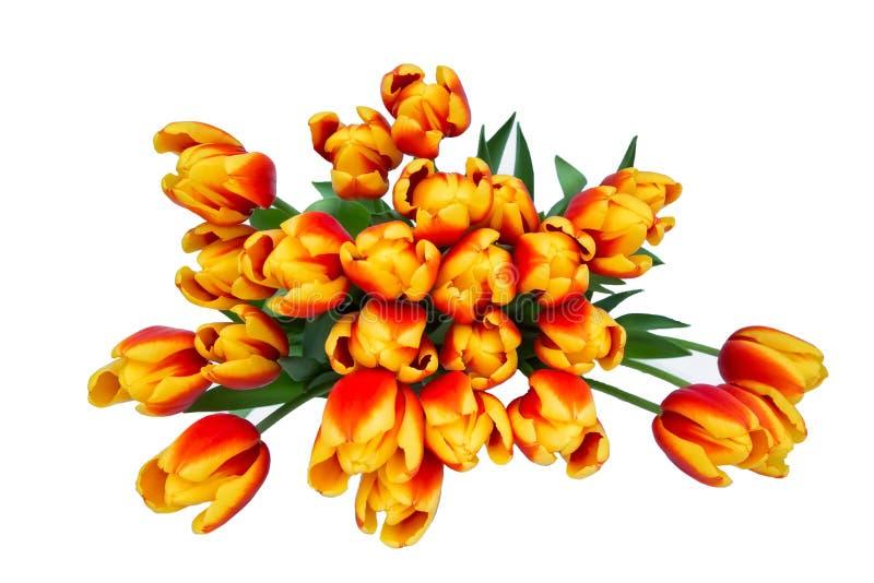 Ramalhete vermelho das tulipas no potenciômetro branco isolado sobre o fundo branco Dia de mães, aniversário, conceito do dia de  fotos de stock royalty free
