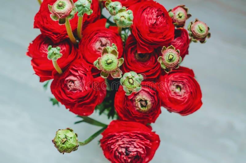 Ramalhete vermelho e verde da mola bonita do botão de ouro do ranúnculo das flores em um macro branco do fundo fotos de stock royalty free