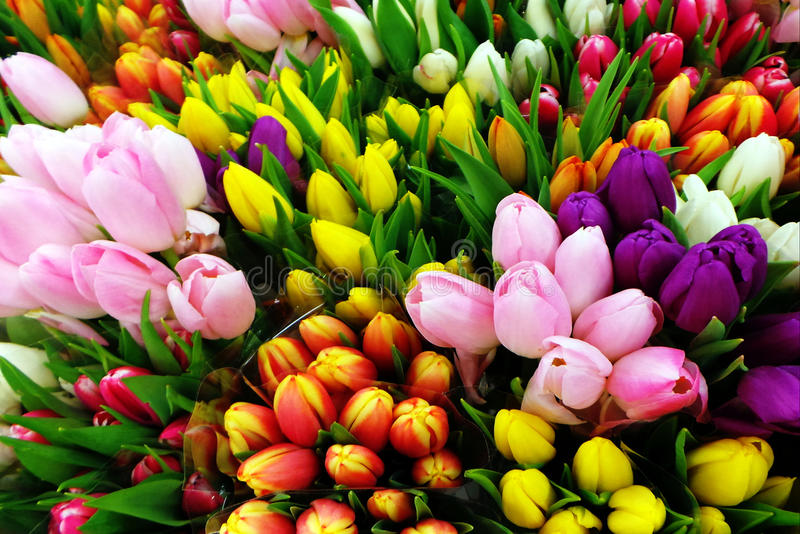 Ramalhetes das tulipas imagens de stock