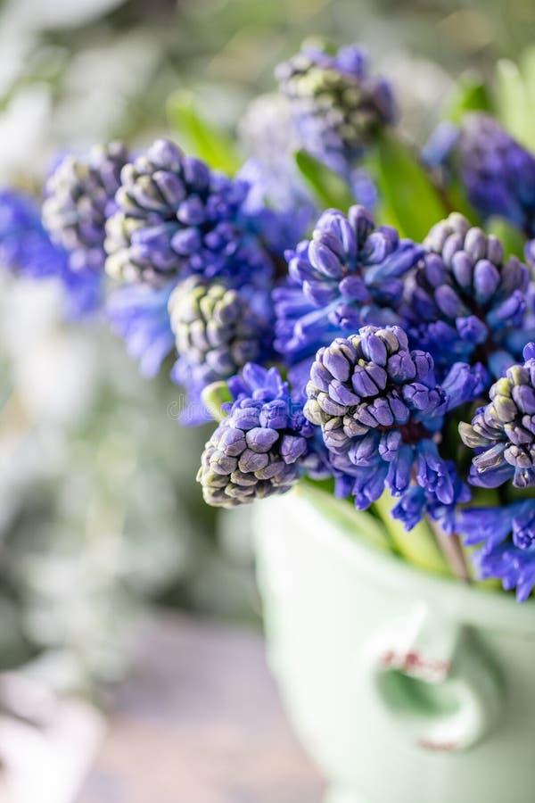 Ramalhetes de jacintos azuis Flores da mola do jardineiro holandês Conceito de um florista em um florista wallpaper imagem de stock royalty free
