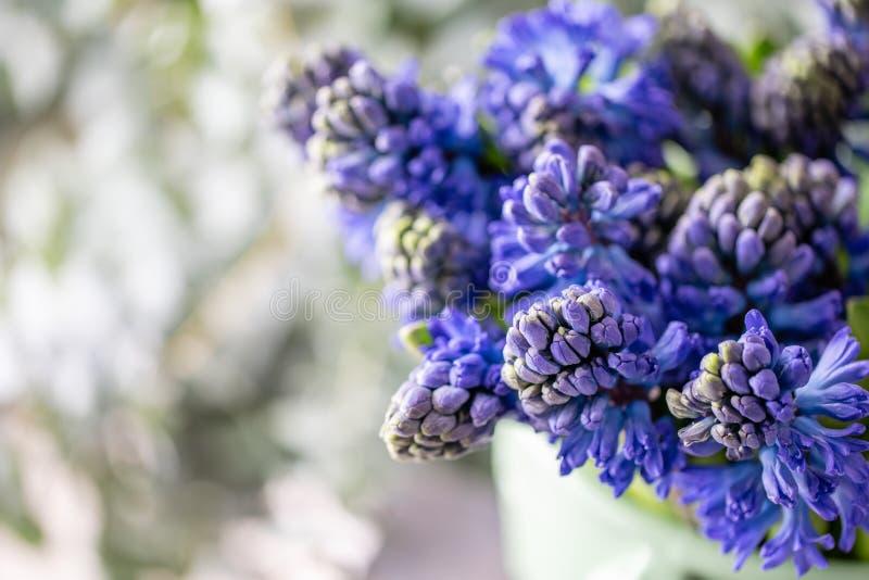 Ramalhetes de jacintos azuis Flores da mola do jardineiro holandês Conceito de um florista em um florista wallpaper foto de stock royalty free