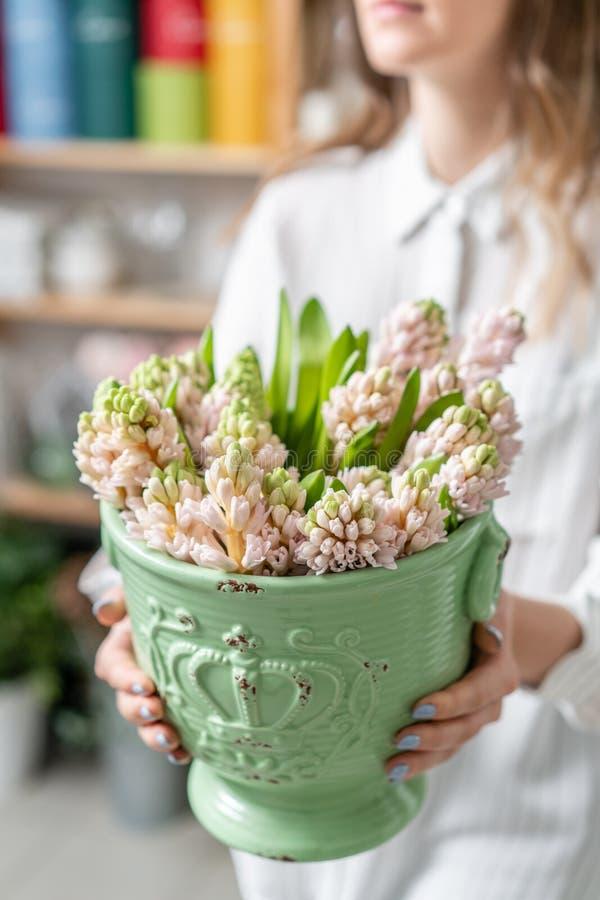 Ramalhetes de jacintos cor-de-rosa na mão da mulher Flores da mola do jardineiro holandês Conceito de um florista em um florista fotos de stock