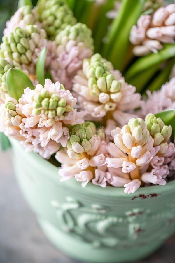 Ramalhetes de jacintos cor-de-rosa no vaso na tabela de madeira Flores da mola do jardineiro holandês Conceito de um florista em  foto de stock