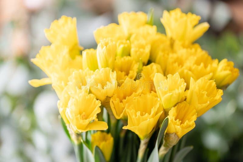 Ramalhetes de narcisos amarelos amarelos Flores da mola do jardineiro holandês Conceito de um florista em um florista wallpaper imagens de stock