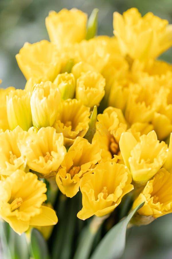 Ramalhetes de narcisos amarelos amarelos Flores da mola do jardineiro holandês Conceito de um florista em um florista wallpaper fotografia de stock