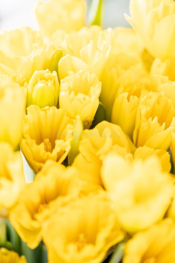 Ramalhetes de narcisos amarelos amarelos Flores da mola do jardineiro holandês Conceito de um florista em um florista wallpaper foto de stock royalty free