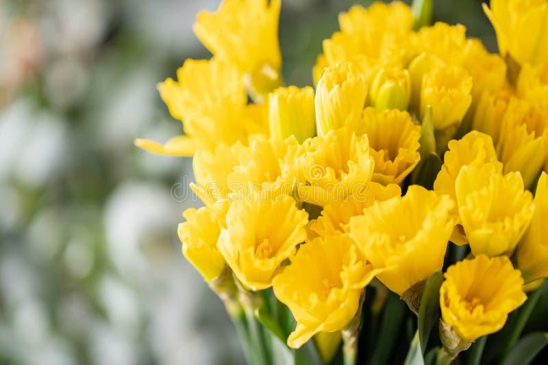 Ramalhetes de narcisos amarelos amarelos Flores da mola do jardineiro holandês Conceito de um florista em um florista wallpaper imagens de stock royalty free