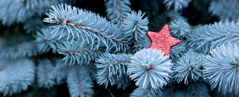 Ramas azules del pino y estrella roja de la Navidad fotografía de archivo