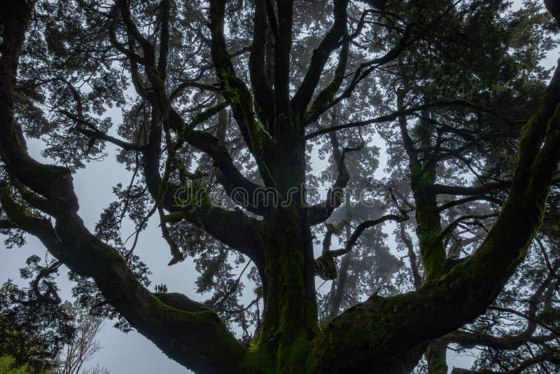 Ramas brumosas de árboles en el bosque imagen de archivo libre de regalías