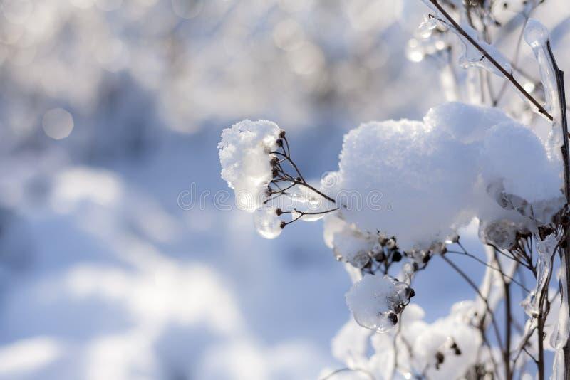 Ramas congeladas de árboles en día soleado Natural, fondo del invierno imagen de archivo libre de regalías