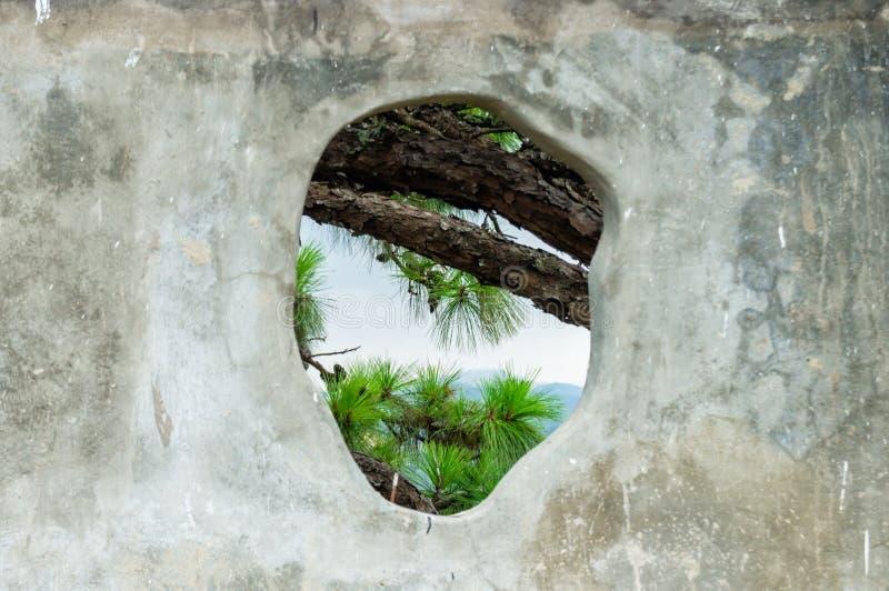 Ramas de árbol conífero a través de un agujero en la pared de piedra foto de archivo libre de regalías