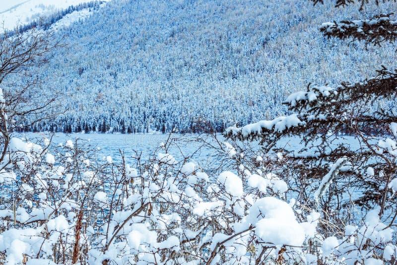 Ramas de árbol con nieve imagen de archivo libre de regalías