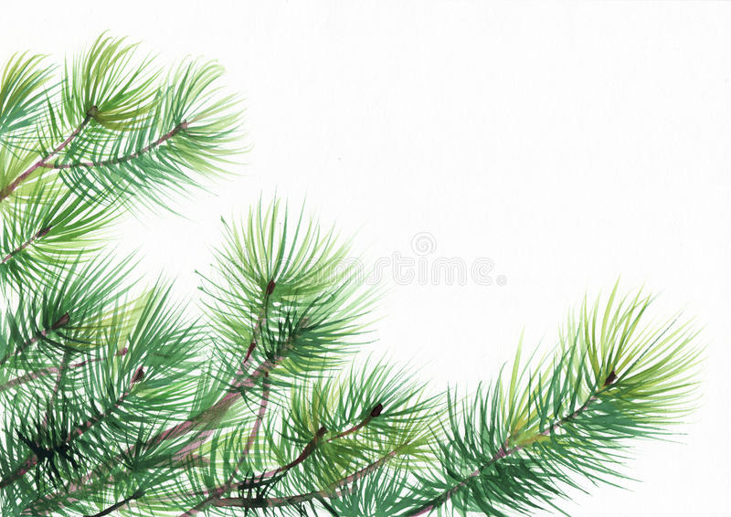 Ramas de árbol de pino libre illustration