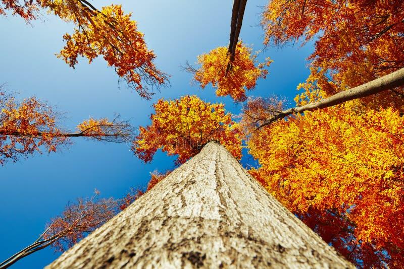 Ramas de árbol en bosque soleado fotos de archivo libres de regalías