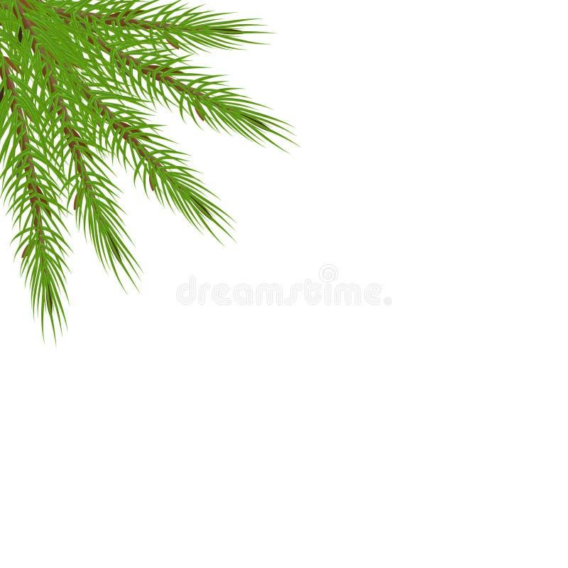 Ramas de árbol en la esquina Rama enorme verde de la picea o del pino libre illustration
