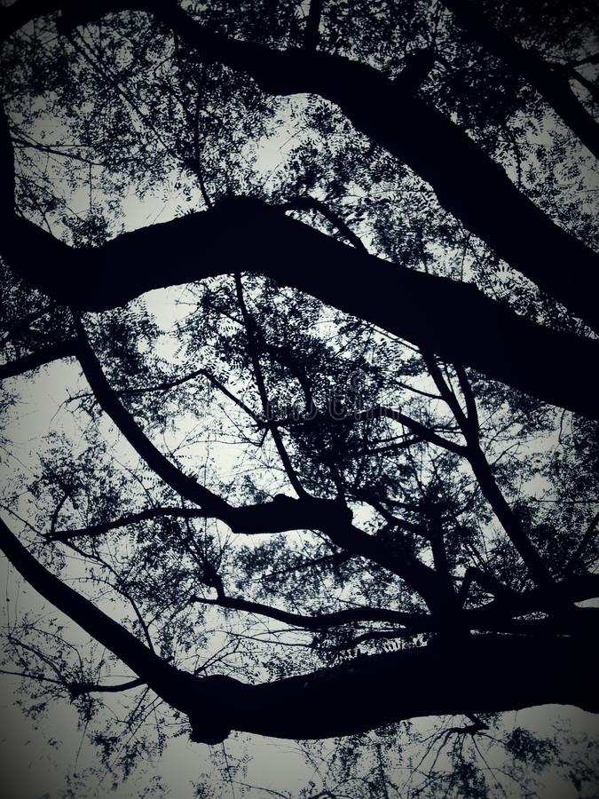 Ramas de árbol en la puesta del sol fotografía de archivo libre de regalías