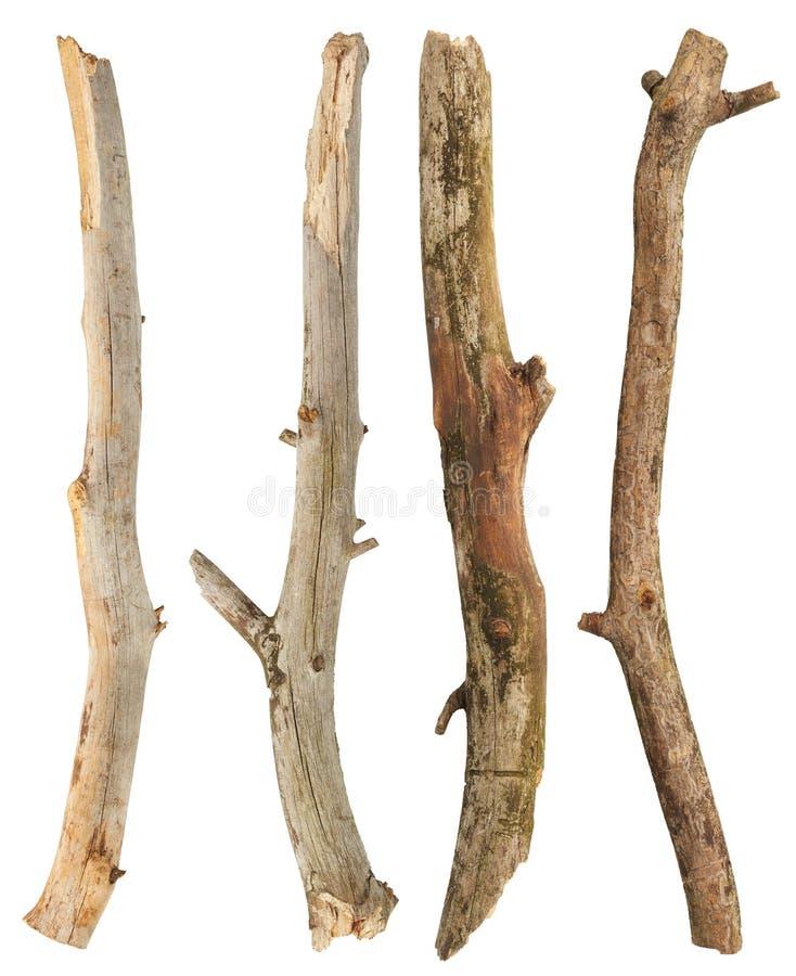 Ramas de árbol fijadas foto de archivo libre de regalías