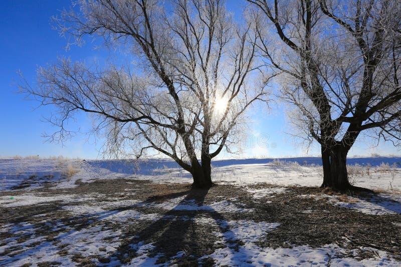 Ramas de árbol heladas contra el cielo azul imagen de archivo libre de regalías