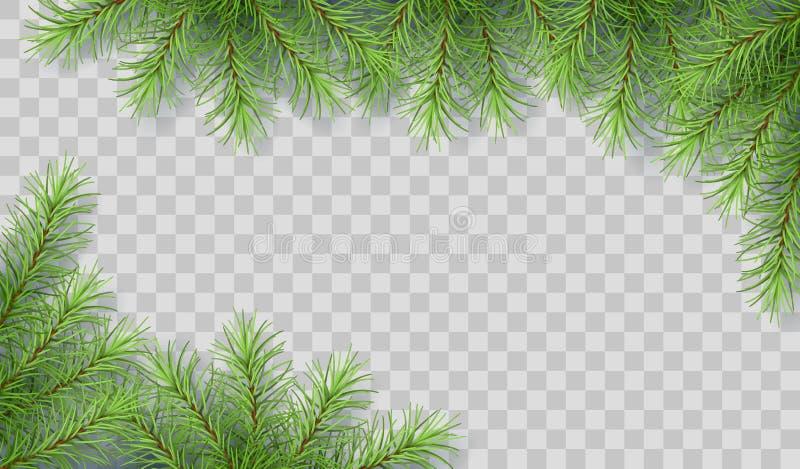 Ramas de árbol de pino ilustración del vector