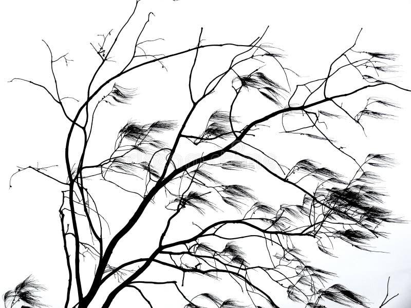 Ramas de árbol que soplan en viento fotos de archivo libres de regalías