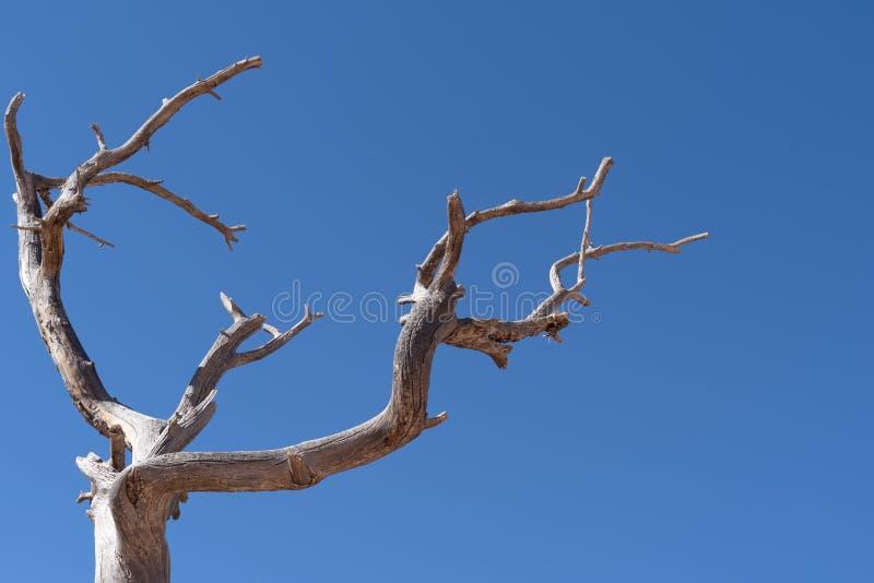 Ramas de árbol torcidas contra un cielo azul brillante Espacio de la copia adicional fotos de archivo libres de regalías