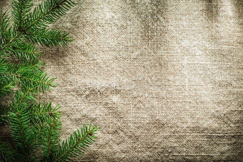 Ramas de árbol verdes de pino en superficie de despido fotos de archivo libres de regalías